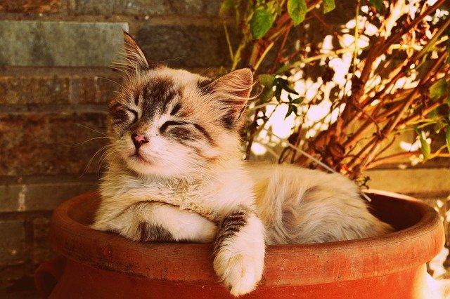Bei Stress: Katze mit Beruhigungsmittel versorgen