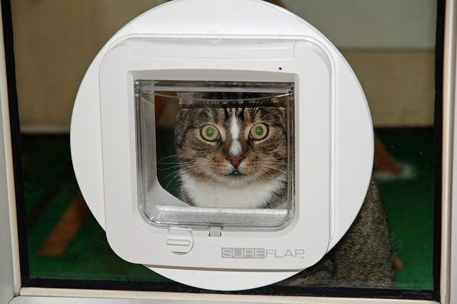 Die Katzenklappe – Braucht man die wirklich?!