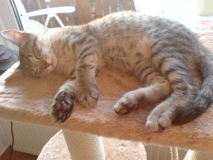 Wenn Katzen trauern – So können Sie helfen
