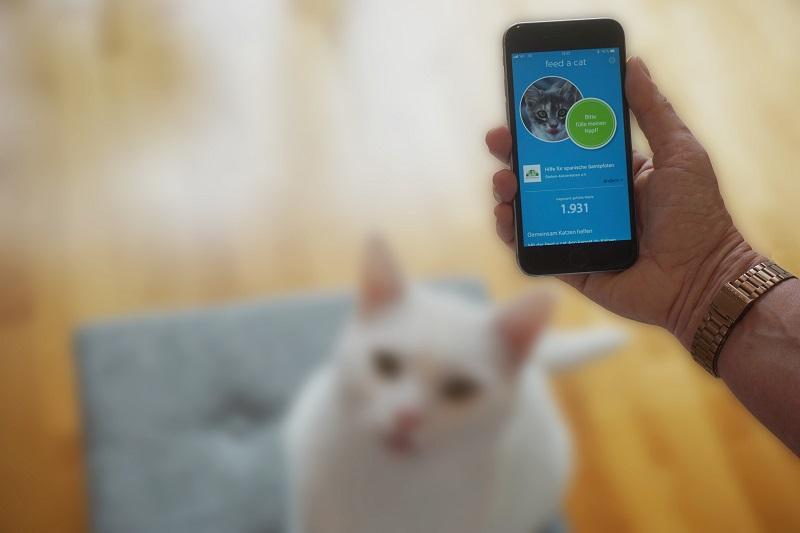 """Neue App """"feed a cat"""" hilft Katzen in Not"""