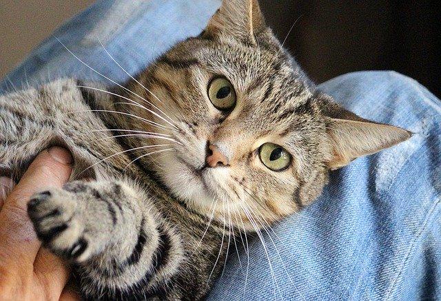 Wuschel-Wuschel, Kraul Kraul – Die Katze will richtig gestreichelt werden