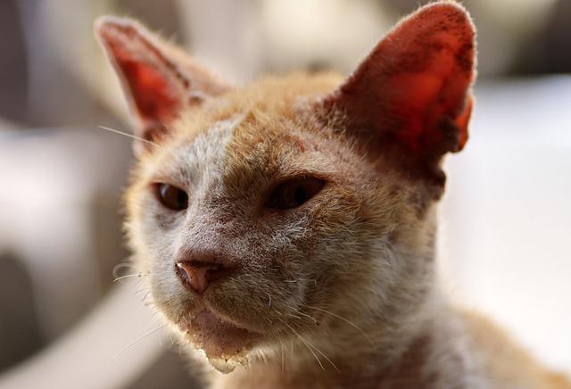 Virekrankheiten bei Katzen