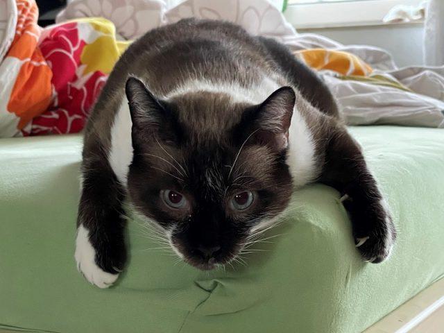 Katzengeschichte-katze-Sofa