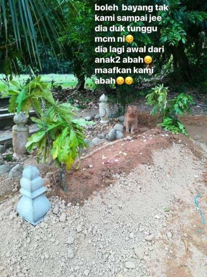Grab des Besitzers der Katze