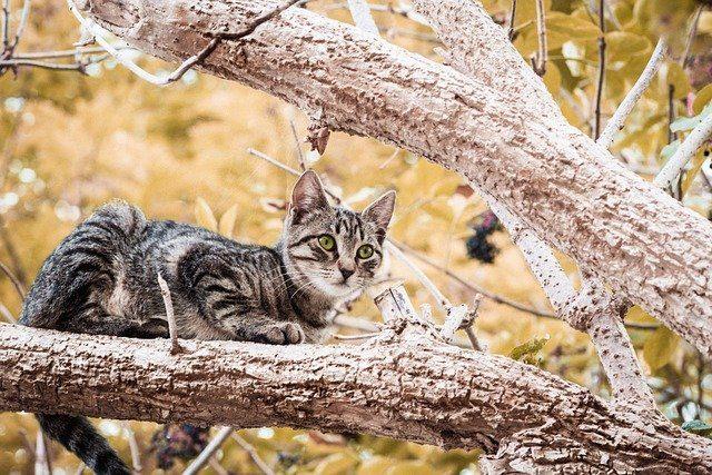 Katze-draussen