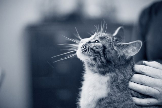 Katzensenioren