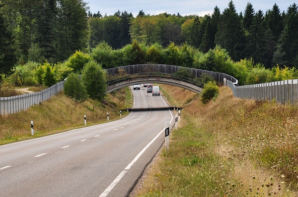 Grünbrücke für Wildtiere