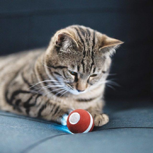 getigerte Katze-roter-Ball