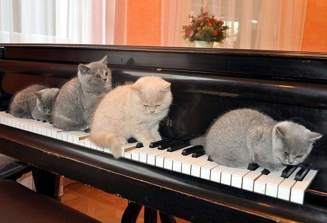 Katzen und Musik