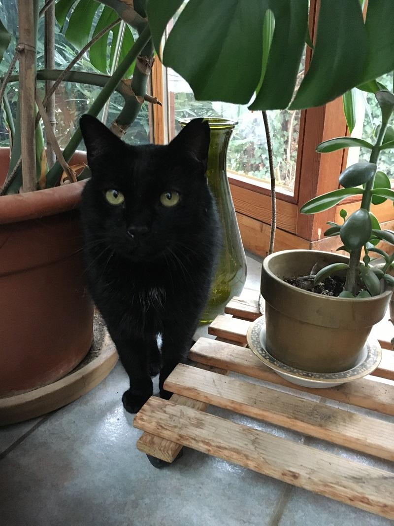 Katze Mogli in Frankreich gefunden