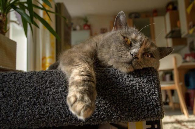Katze mit Demenz