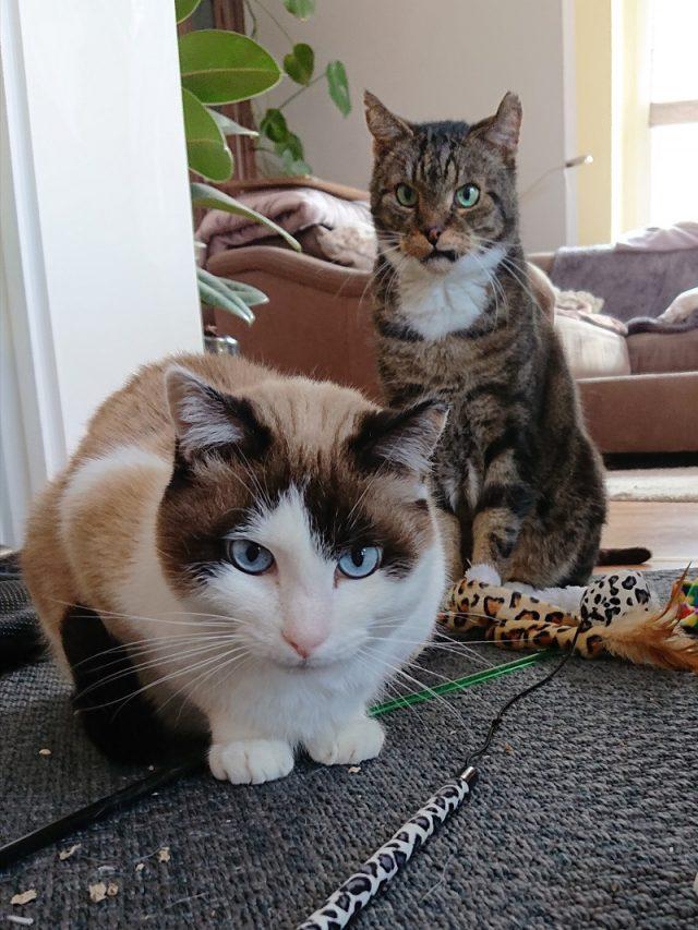 Hund und Katze im Alter