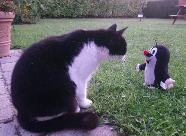 Katze begegnung im Garten
