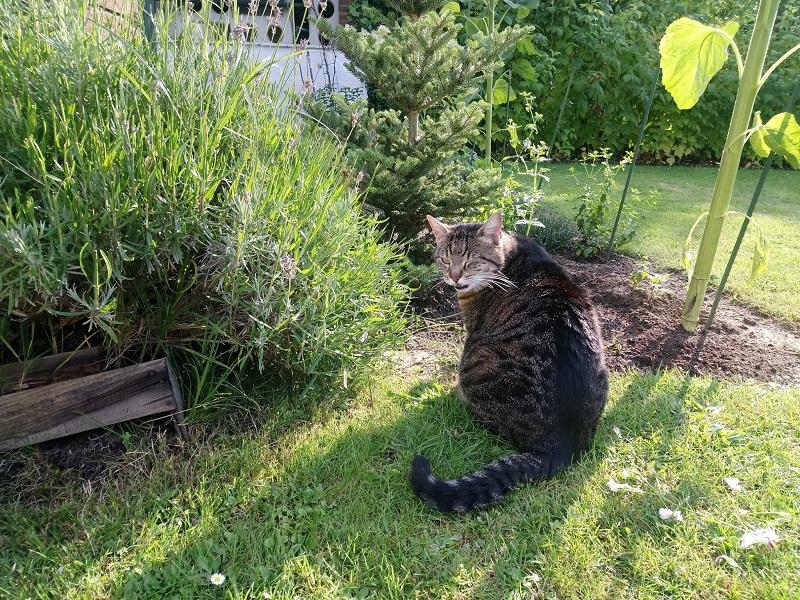 Katzen im Garen auf dem Rasen