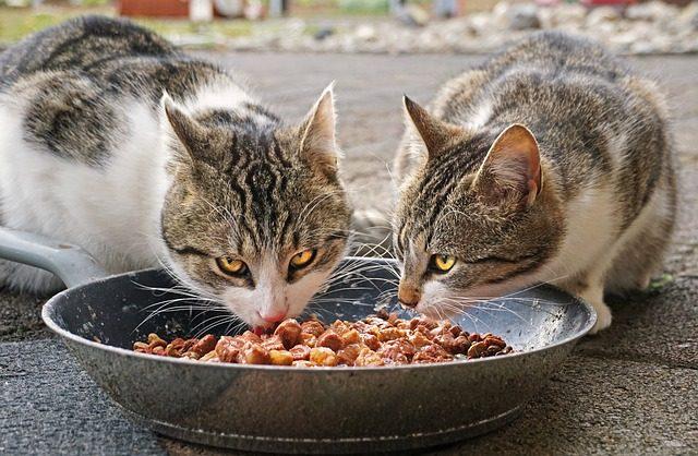 Katze Nahrung