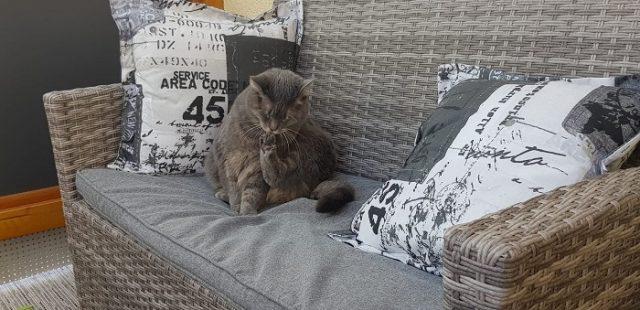 Katze putz sich auf Sofa