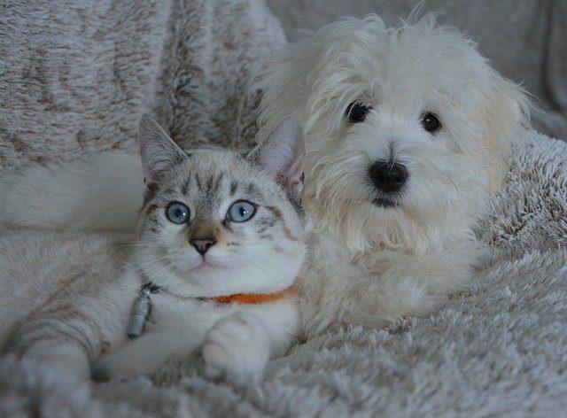 Hund und Katzen Welpen